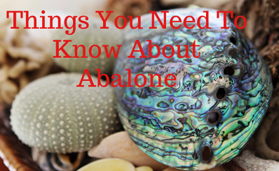 Things You Need To Know About Abalone