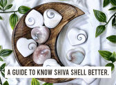 A Guide To Know Shiva Shell Better