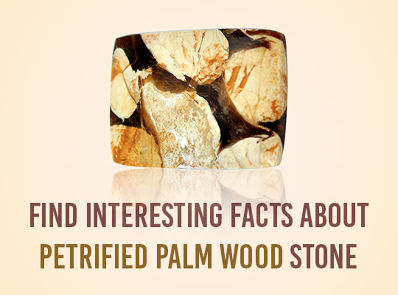 Find Interesting facts about Petrified Palm Wood stone