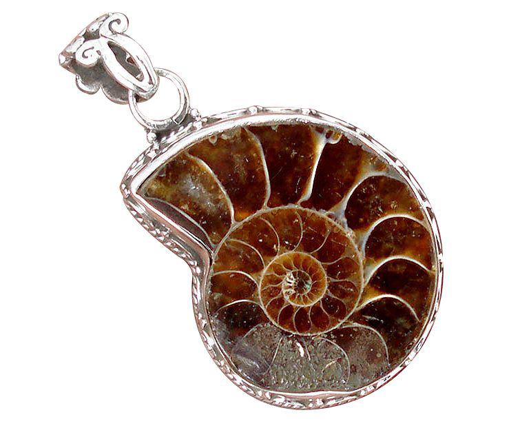 brown ammonite pendant