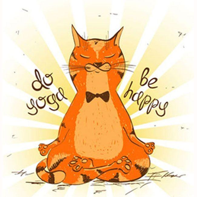 Miss Mittens Yoga Cat