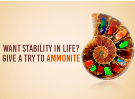 Want Stability In Life ? Give A Try To Ammonite