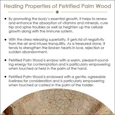 Petrified Palm Wood