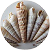 Auger Shell