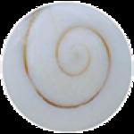 Shiva Shell
