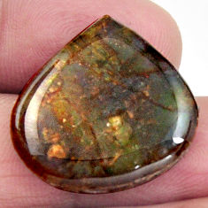 Natural 14.20cts ammolite (canadian) multi color 22x22 mm loose gemstone s15517