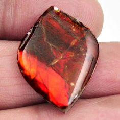 Natural 13.45cts ammolite (canadian) multi color 26x19 mm loose gemstone s15520