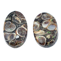 Natural 18.95cts turritella fossil snail agate 20x12mm oval loose gemstone s3743