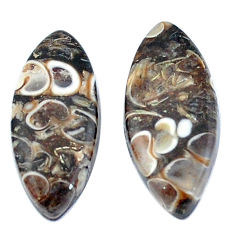 Natural 13.85cts turritella fossil agate 22x10 mm marquise loose gemstone s3747
