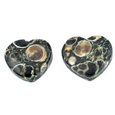 Natural 18.95cts turritella fossil agate 15x17 mm heart loose gemstone s3751