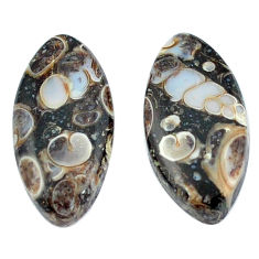Natural 16.80cts turritella fossil snail agate 22x11 mm marquise gemstone s3755