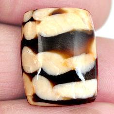 Natural 14.95cts peanut petrified wood fossil 20x15 mm loose gemstone s4349
