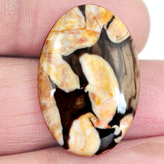 Natural 16.90cts peanut petrified wood fossil 26x17 mm oval loose gemstone s4351