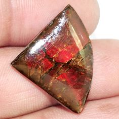 Natural 12.40cts ammolite (canadian) multi color 26x20 mm loose gemstone s6389