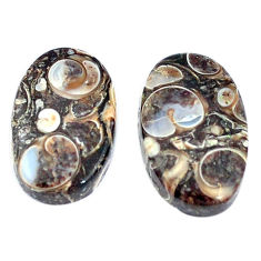 Natural 19.45cts turritella fossil snail agate 19x12mm pair loose gemstone s7666