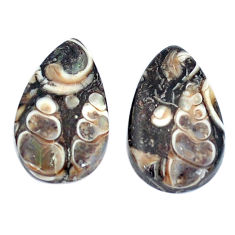 Natural 15.10cts turritella fossil snail agate 20x12mm pair loose gemstone s7667