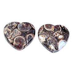 Natural 16.30cts turritella fossil snail agate 15x16mm pair loose gemstone s7669