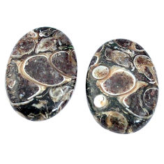 12.40cts turritella fossil snail agate 19x13.5 mm pair loose gemstone s7673