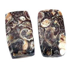 16.30cts turritella fossil snail agate 19x10 mm pair loose gemstone s7676