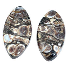 Natural 20.10cts turritella fossil snail agate 24x12mm pair loose gemstone s7678