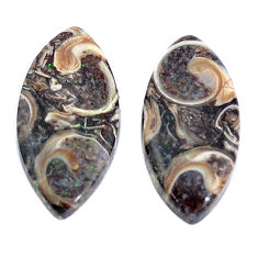 Natural 14.35cts turritella fossil snail agate 22x11mm pair loose gemstone s7679