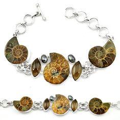 Natural brown ammonite fossil hematite 925 silver bracelet jewelry k78123