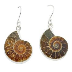 925 sterling silver natural brown ammonite fossil earrings jewelry d25118