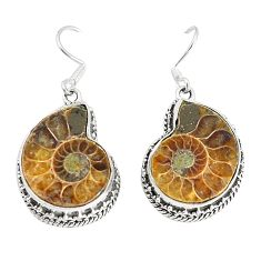 Natural brown ammonite fossil 925 silver dangle earrings jewelry d25679