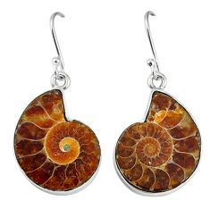 Natural brown ammonite fossil 925 silver dangle earrings jewelry k84029
