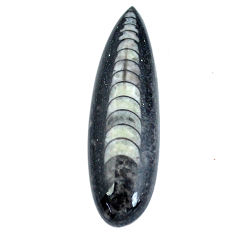 Natural 19.15cts orthoceras black cabochon 37x11 mm pear loose gemstone s11332