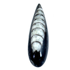 Natural 25.15cts orthoceras black cabochon 38x12 mm pear loose gemstone s11327