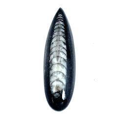 Natural 25.15cts orthoceras black cabochon 42.5x12.5 mm loose gemstone s11330