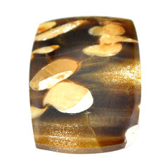 Natural 18.10cts peanut petrified wood fossil 24x18 mm loose gemstone s11063