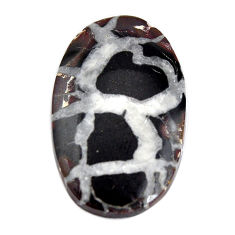 Natural 13.10cts septarian gonads brown cabochon 25x15 mm loose gemstone s15057