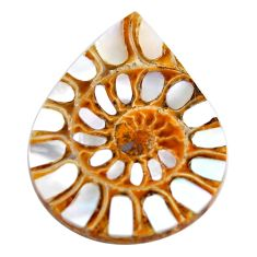 Natural 36.20cts shell in ammonite cabochon 34x26 mm pear loose gemstone s15193