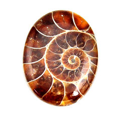 ammonite fossil cabochon 27x20 mm oval loose gemstone s15441