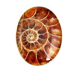 ammonite fossil cabochon 28x20 mm oval loose gemstone s15442