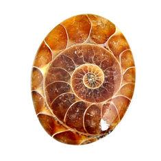 ammonite fossil cabochon 27x20 mm oval loose gemstone s15453