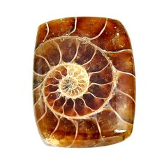 Natural 26.30cts ammonite fossil cabochon 27x20 mm octagan loose gemstone s15465
