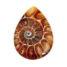 ammonite fossil cabochon 32x21 mm pear loose gemstone s15472