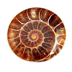 ammonite fossil cab 26.5x26.5 mm round loose gemstone s15479