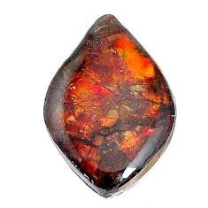 Natural 12.30cts ammolite (canadian) multicolor 24x15.5 mm loose gemstone s22790