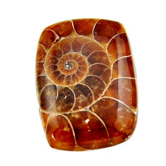 Natural 15.30cts ammonite fossil brown cabochon 22.5x16 mm loose gemstone s17670