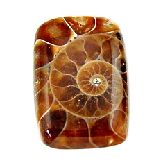 Natural 17.40cts ammonite fossil brown cabochon 23.5x15 mm loose gemstone s17661