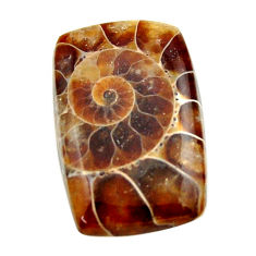 Natural 16.30cts ammonite fossil brown cabochon 23x15 mm loose gemstone s17675