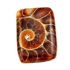 Natural 13.45cts ammonite fossil brown cabochon 31.5x15 mm loose gemstone s17673