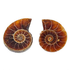 Natural 6.30cts ammonite fossil cabochon 12.5x10 mm pair loose gemstone s19088