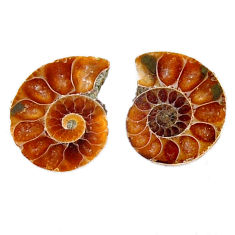 Natural 8.25cts ammonite fossil cabochon 15x12 mm pair loose gemstone s19081