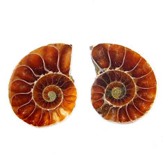 Natural 7.40cts ammonite fossil cabochon 15x12 mm pair loose gemstone s19082