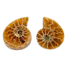 Natural 5.30cts ammonite fossil cabochon 15x12 mm pair loose gemstone s19084